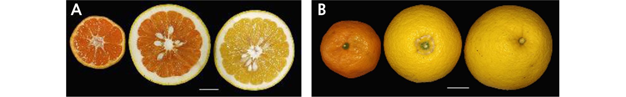 http://static.apub.kr/journalsite/sites/kshs/2020-038-01/N0130380111/images/HST_38_01_11_F1.jpg