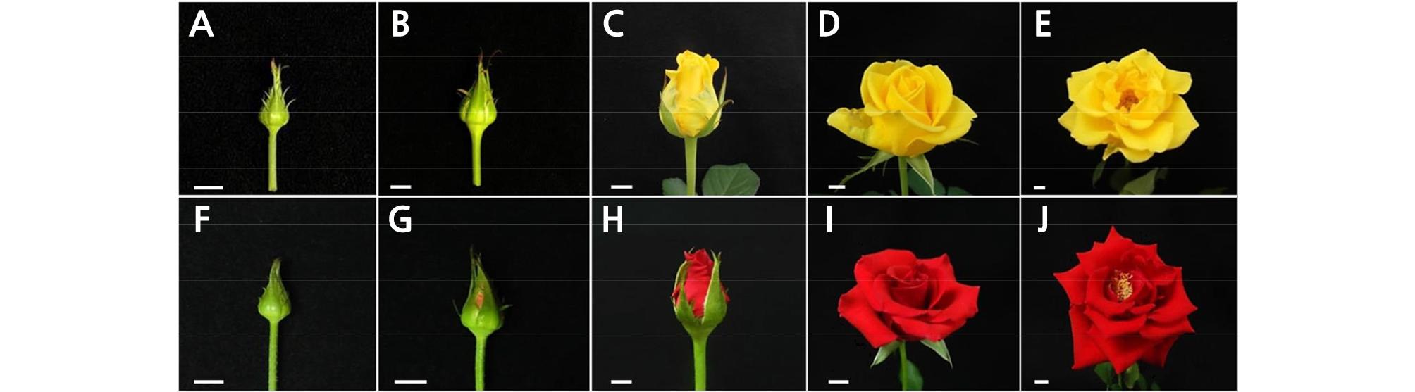 http://static.apub.kr/journalsite/sites/kshs/2020-038-05/N0130380503/images/HST_38_05_03_F1.jpg